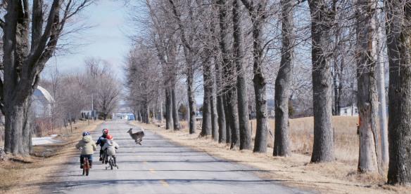 """""""Deer on the Road"""""""